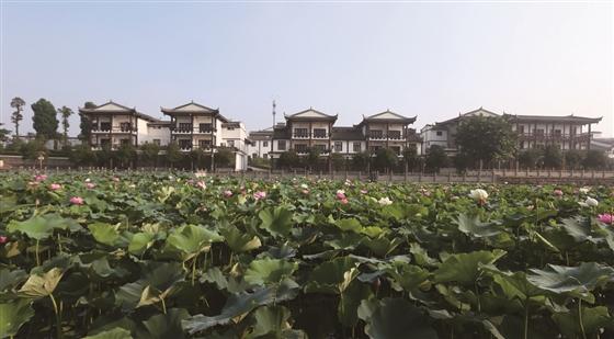 东坡区白马镇龚村田园风光美景如画.